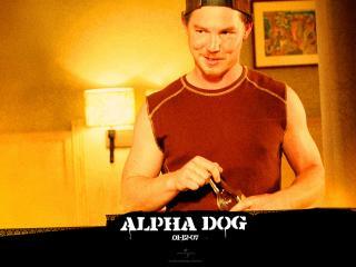 обои Alpha Dog хитрый фото