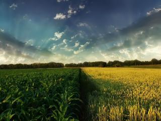 обои Два поля под голубым небом фото
