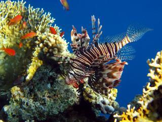 обои Коралы ракушки рыбы фото