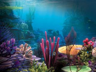 обои Секреты красного моря фото