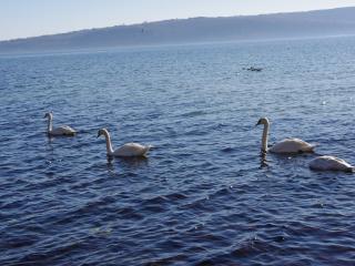обои Лебединное озеро днем фото