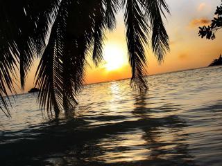 обои Ветви пальмы касаются воды фото