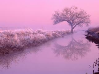 обои Зимний пейзаж дерева фото