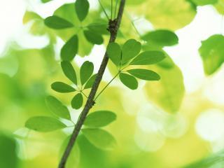 обои Вечно зеленое растение фото