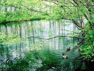обои Лесной весенний пруд фото
