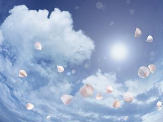 обои Лепестки на фоне неба фото
