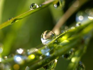 обои Шарики воды на траве фото