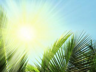 обои Африканское солнышко фото