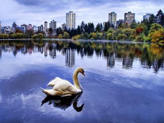 обои Лебедь в мегаполисе фото