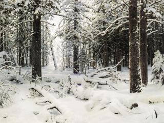 обои Иван Шишкин - Зима фото