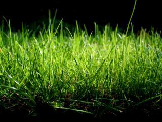 обои Зелёная трава на темном фоне фото