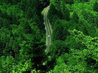 обои Дорога среди густой зелени фото