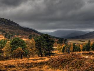 обои Золотой лес фото