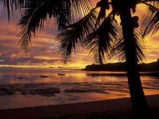 обои Пальма на закате фото