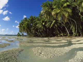 обои Прекрасный пляж фото