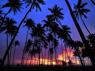 обои Пальмовый лес фото