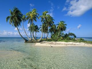 обои Пальмы на островке фото