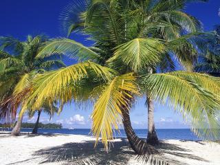 обои Огромная пальма фото