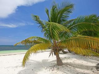 обои Пальма на пляже фото