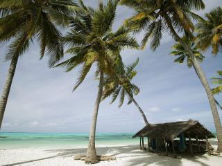 обои Домик среди пальм фото