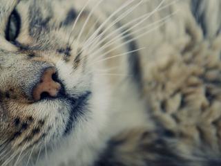 обои Кот в приближенном виде фото