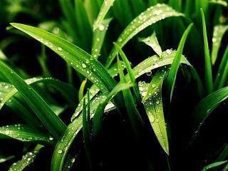 обои Роса на траве фото