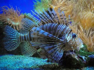 обои Рыба в аквариуме фото