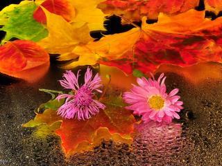 обои Осенние листья фото