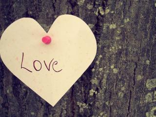 обои Сердце на дереве фото