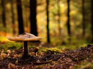 обои Гриб в лесу в листве фото