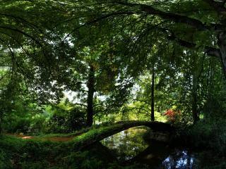 обои Лесной сквер летом фото