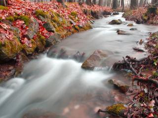 обои Водопад с цветами фото