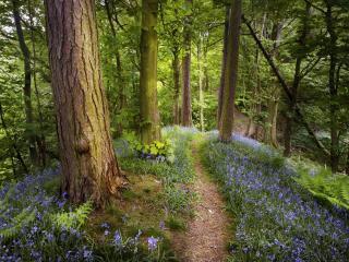 обои Летний лес фото