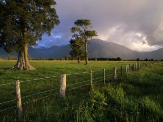 обои Забор перед лесом фото