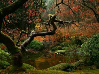 обои Тернистый лес фото