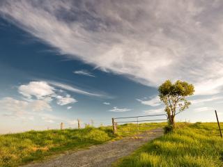 обои Поле и дерево фото
