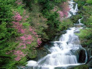 обои Красивейший водопад с цветущими деревьями фото
