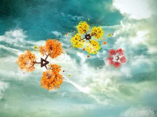 обои Мульти цветы фото