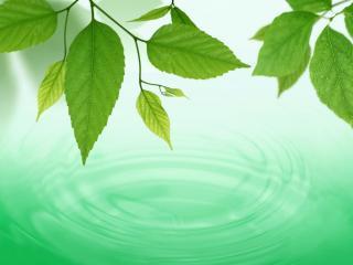 обои Капли падают с листьев в воду фото