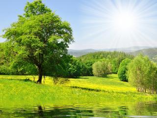 обои Очаровательная природа у озера фото