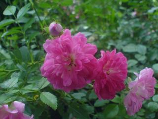 обои для рабочего стола: Розовая семейка