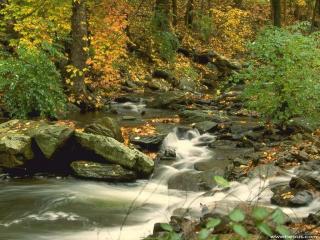 обои Осенний ручей в лесу, у камней фото