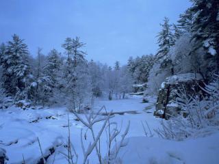 обои Зимний ручей в лесу, у заснеженных елей фото