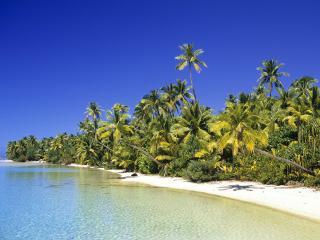 обои Пальмы растут на берегу фото
