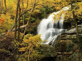 обои Водопад в лесу среди золотых ветвей фото