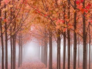 обои Листья медного цвета фото