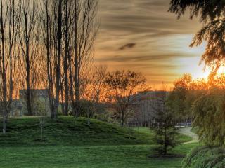 обои Голые деревья на окраине города фото