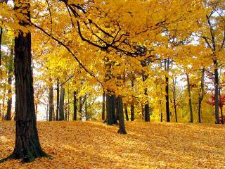 обои Золотой осенний лес фото