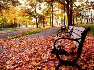 обои Осень. Скамейка в кленовых листьях фото
