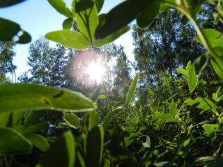 обои Солнце через траву фото